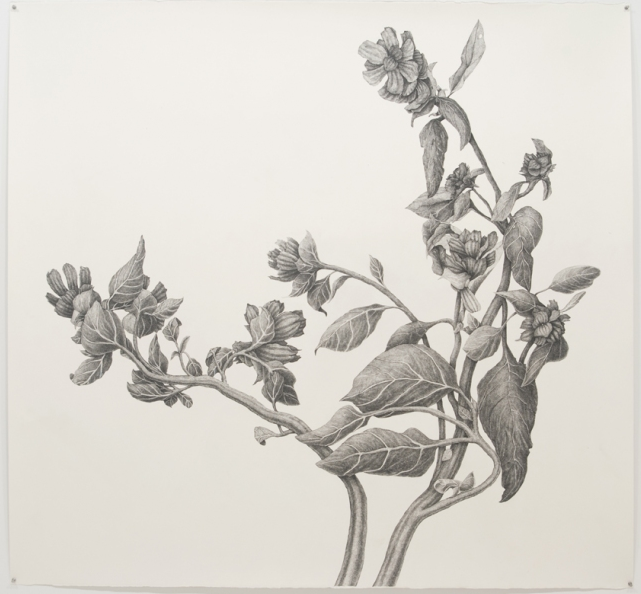 """Joan Linder. """"Black Weed"""". 2010."""