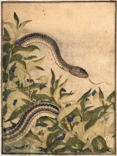 "Kitagawa Utamaro. ""Rat Snake with Dayflower Plant"". January 1788"