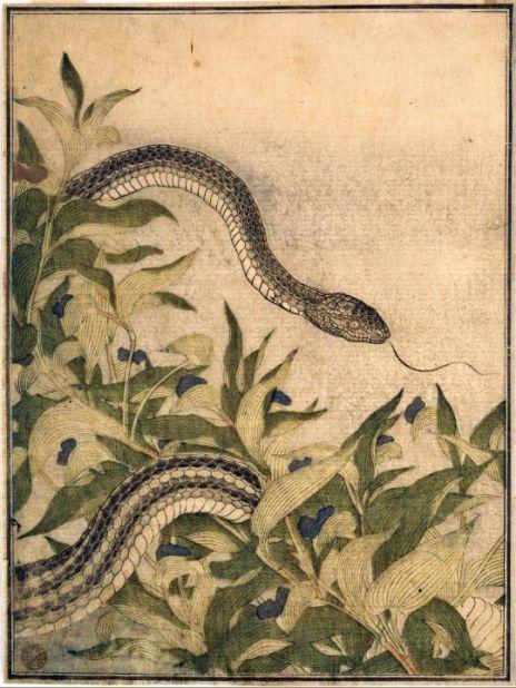 "Kitagawa Utamaro. ""Rat Snake with Dayflower Plant"". January 1788"