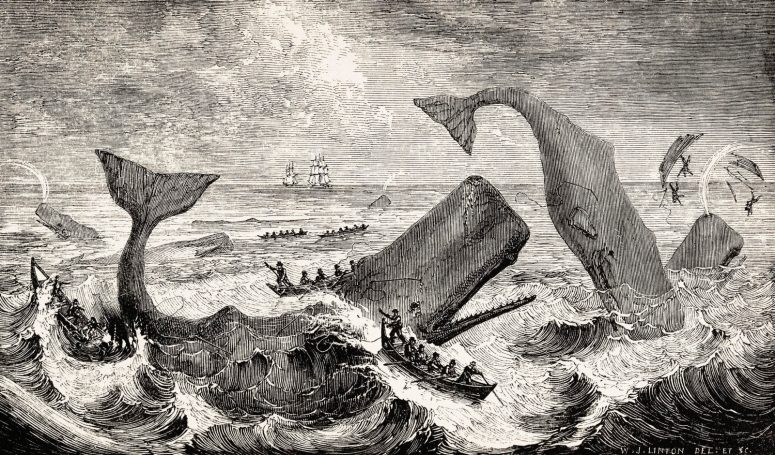 Boats attacking whales, by Thomas Beale, 1839