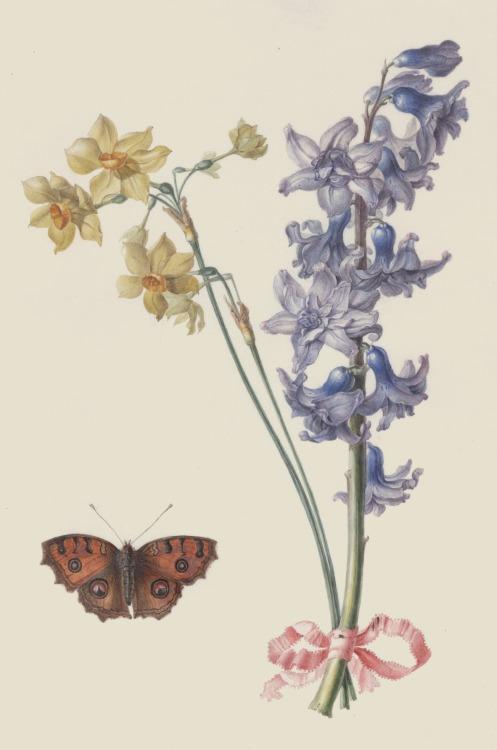 Recueil de dessins de fleurs - Madeleine-Françoise Basseporte - before 1780